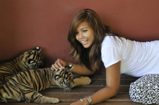 If a Pattaya Bar Girl was an Animal What Would She be and Why?