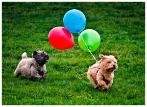 Balloon Chaser